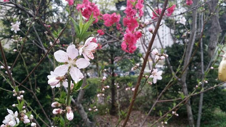 4월 봄.. 예쁜 꽃들.. 무슨 꽃일까요 예쁘네요 ^^ (3).jpg