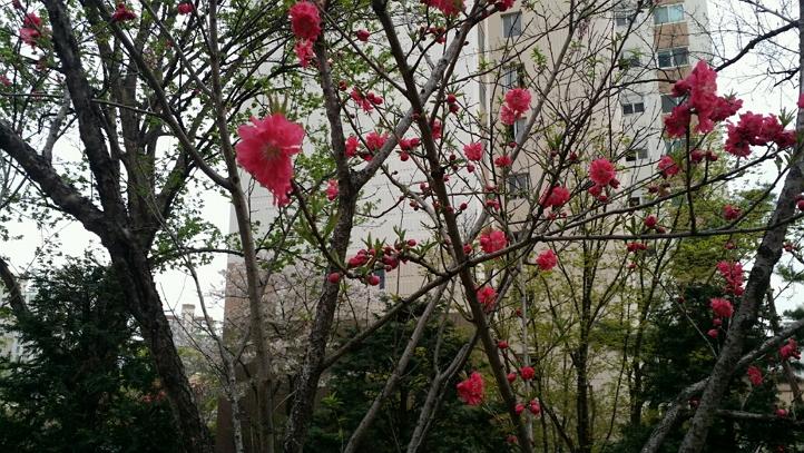 4월 봄.. 예쁜 꽃들.. 무슨 꽃일까요 예쁘네요 ^^ (1).jpg